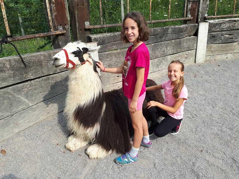 Attività con i lama