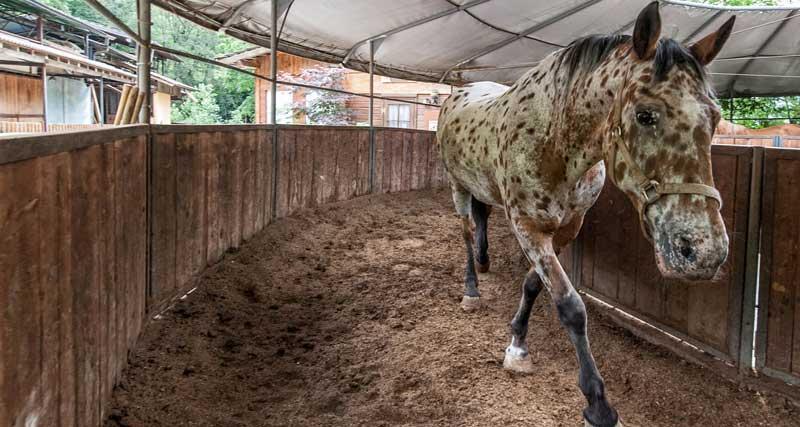 Allevamento di cavalli a Bergamo