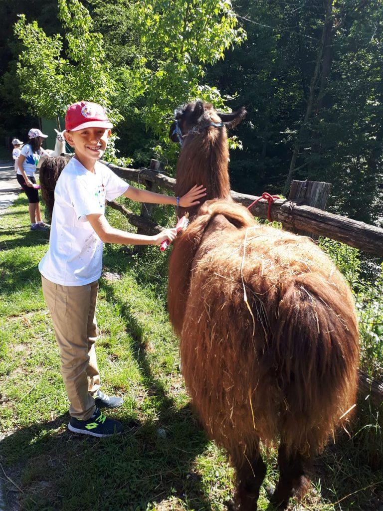Campo estivo Bergamo - trekking con i lama - 14/20 luglio 2019 - 1