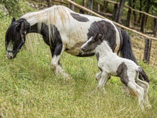 Cavalli in agriturismo a Bergamo